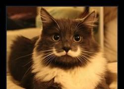 Enlace a Los gatos sorprendidos son los mejores