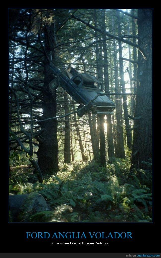 Bosque Prohibido,coche,ford anglia,harry potter,volador