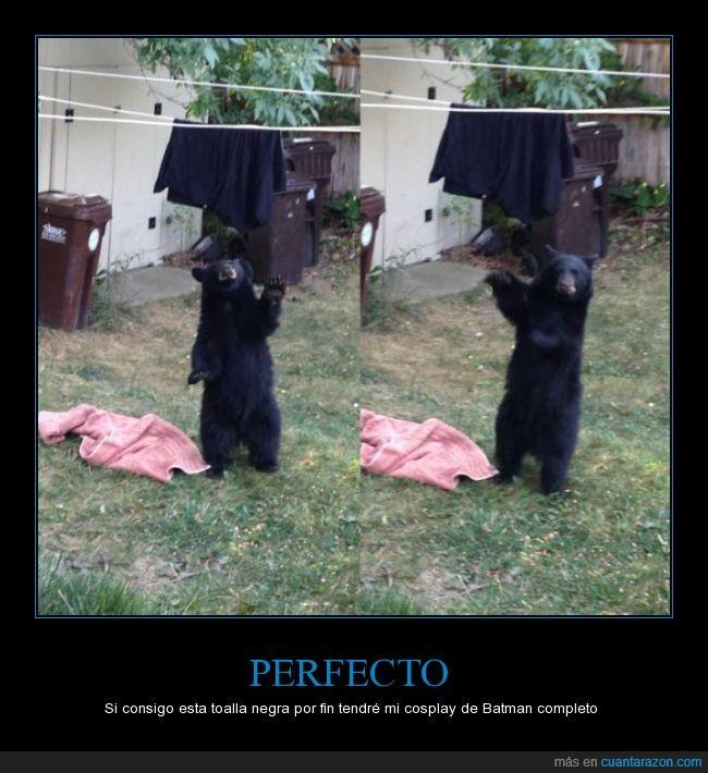 negra,oso,robar,tela,tendedero,toalla