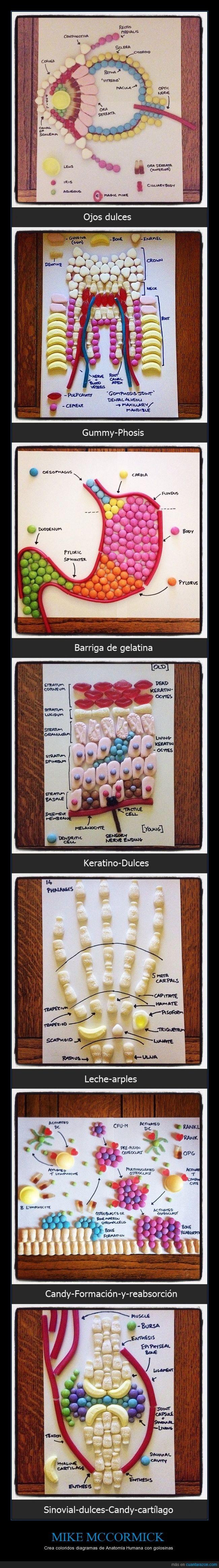 "Anatomía de golosinas,Anatomía Humana,arples,Barriga,cartílago,dulces,Escocia,estudiante de Medicina,Formación,gelatina,Glasgow,Gummy-Phosis,Keratino,Leche,Mike McCormick,Ojos,reabsorción,Sinovial,""Candy Anatomy"""