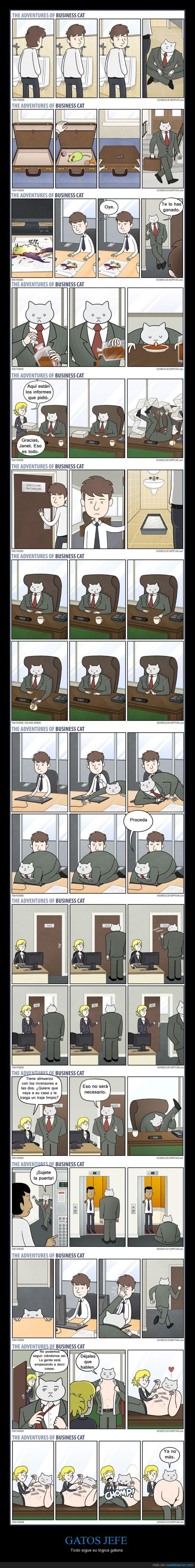 animal,divertido,empresario,extraño,gato,jefe