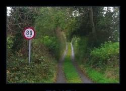 Enlace a En Irlanda puedes ir a lo loco por el bosque