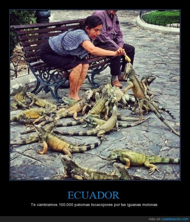 abuelas,iguanas,mexico,parque,parque centenario guayaquil