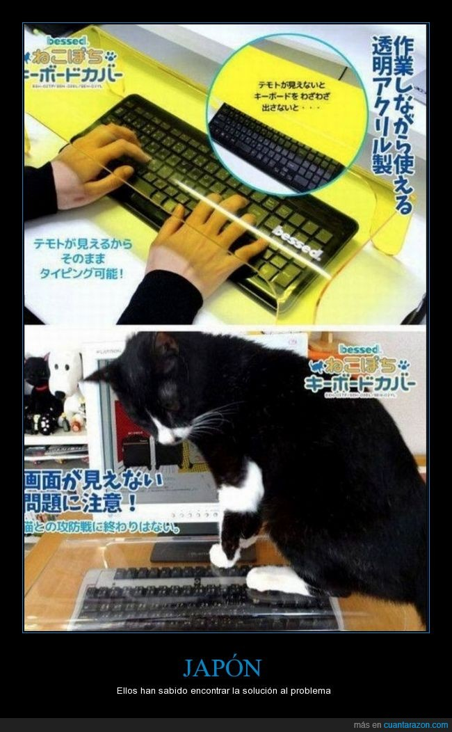 gato,protector,teclado