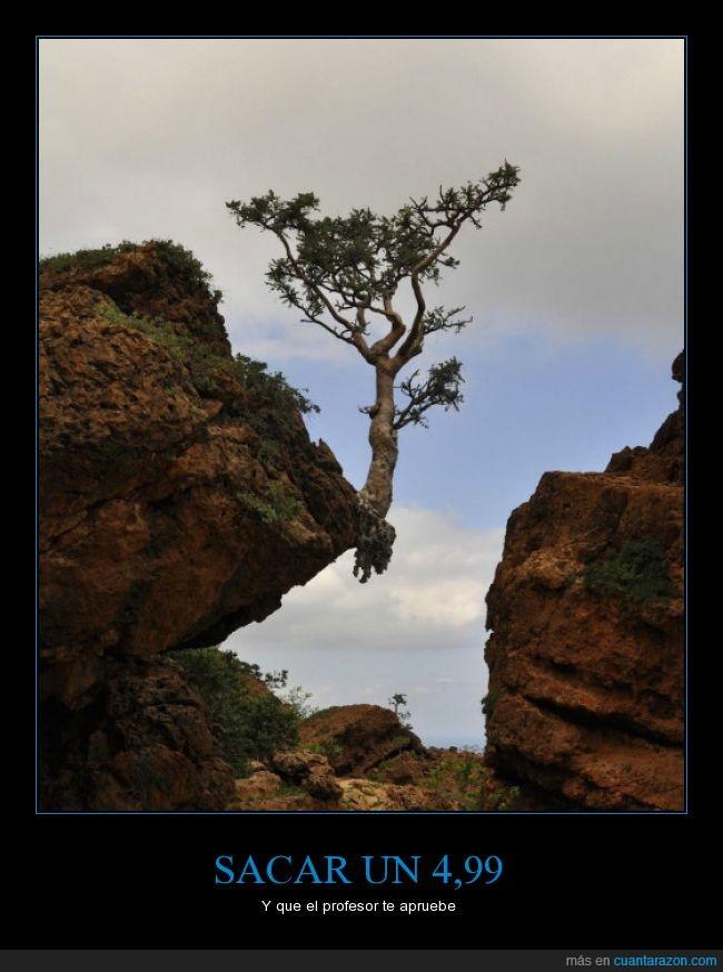 árbol,examen,justo,punta