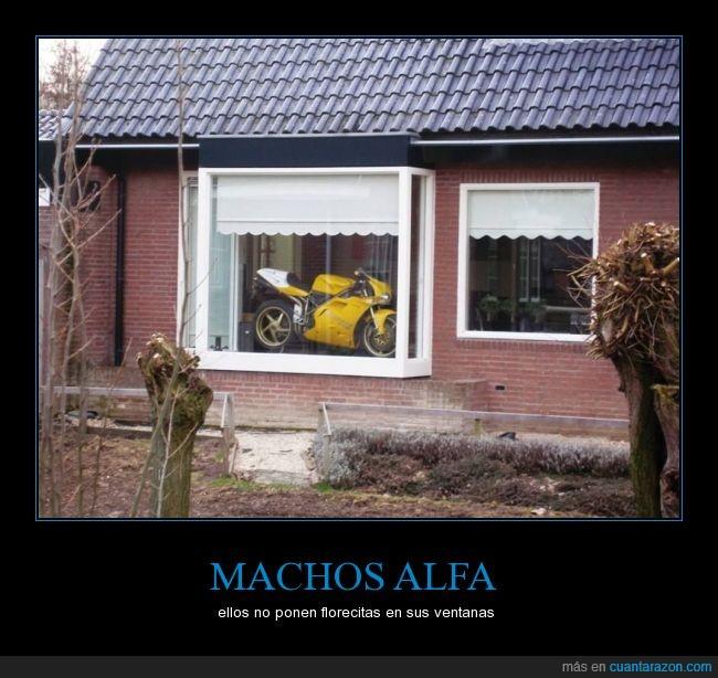 aparador,casa,Cbr,escaparate,motocicleta,presumir,ventana