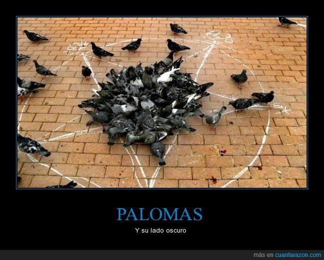 oscuro,palomas,pentagrama