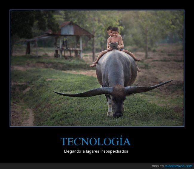 buey,cuernos,fotografía,niños,tableta,Tecnología