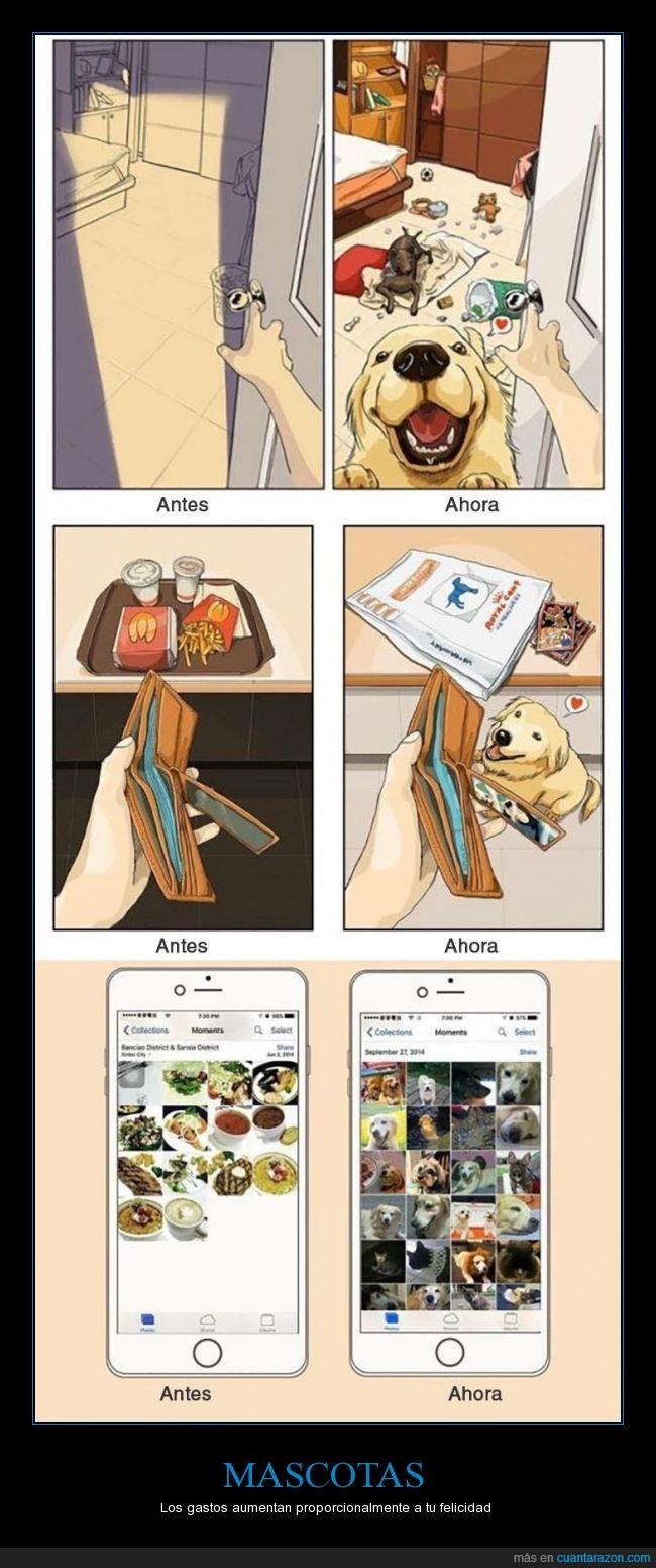 amistad,felicidad,fotos,gastos,perro