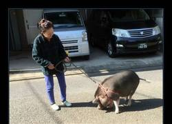 Enlace a Tanto ver Peppa Pig...