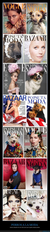 adoptar,animal,moda,modelo,perro,rescatar,revistas,salvar