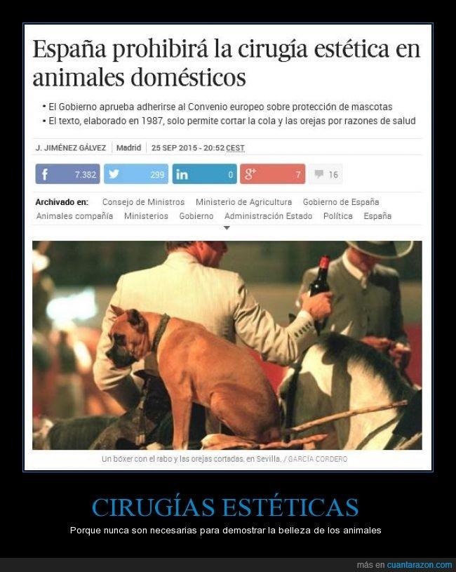 aun falta salvar a los toros,cirugìa,cola,España,estética,ley,mascotas,operación,orejas,perros