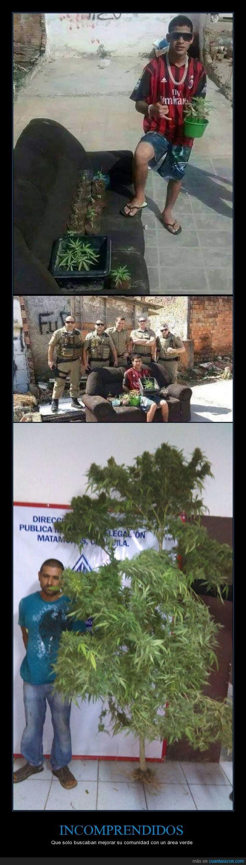 detener,detenido,droga,maria,pillar,plantación,policia
