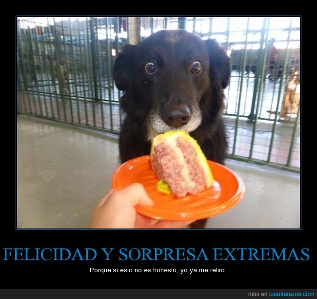 abiertos,comer,comida,deseo,felicidad,ojos,pastel,perro,sorpresa
