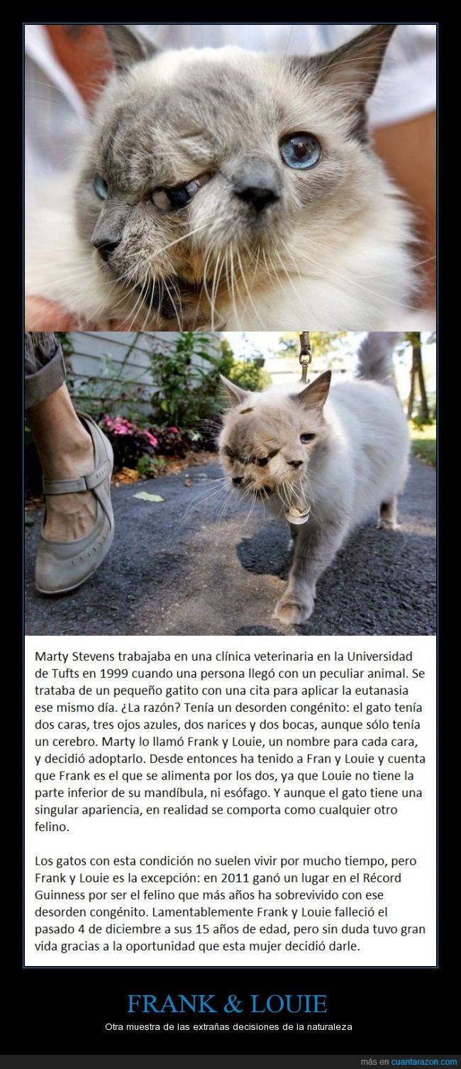 deformidad,dos caras,gatos,no se sabe si son dos o uno,perturbador,pobre misifú :(,récord guinness