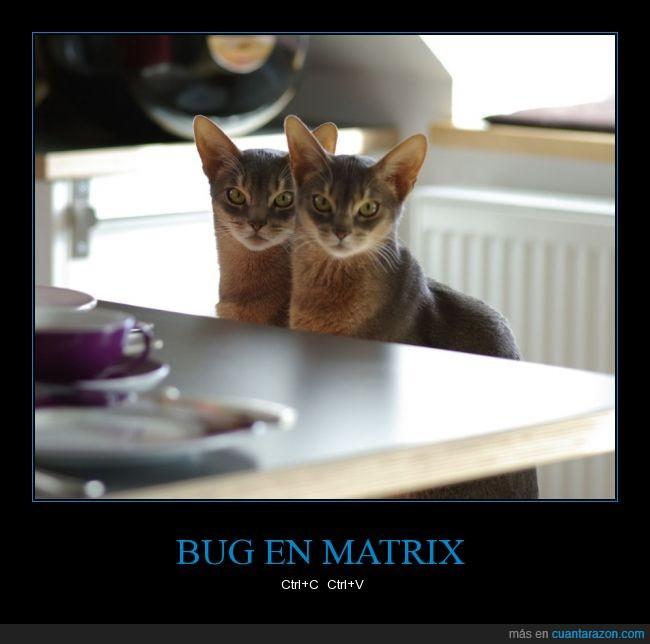 fallo,Gato,gemelo,igual,matrix