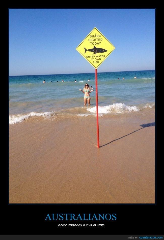 anunció,Australia,letrero:tiburón avistado hoy entrar agua a propio riesgo,nadar,peligro,playa,riesgo,Tiburones