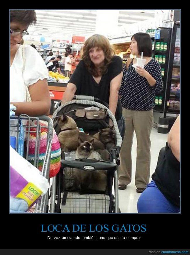 carro,encima,gatos,llevar,loca,mujer,señora,supermercado,tienda,walmart