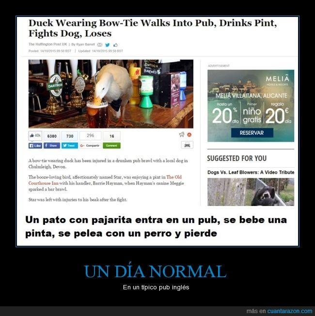 cerveza,notición,pajarita,pato,pelea,perro,pub