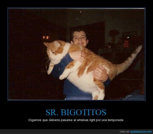 bigotitos,dieta,gato,gigante,gordo,light,misifu,whiskas