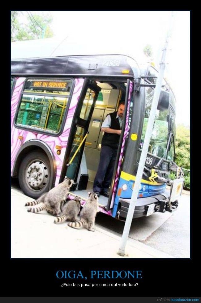 autobus,mapache,parada,preguntar
