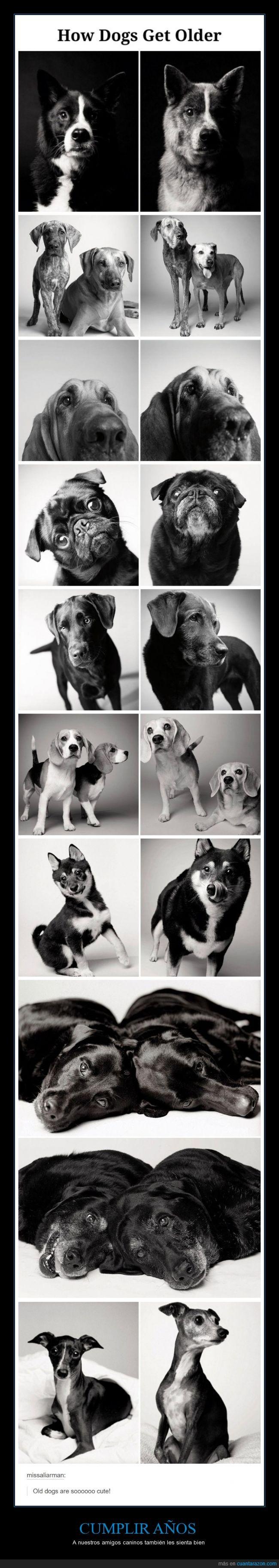 año,canas,crecer,edad,evolución,perrete,perro