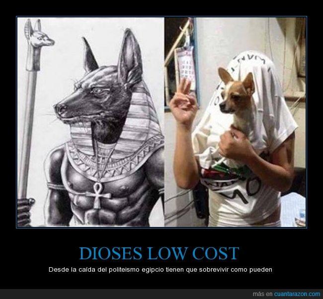 Anubis,chihuahua,dios,egipcio,egipto,perro,pobre