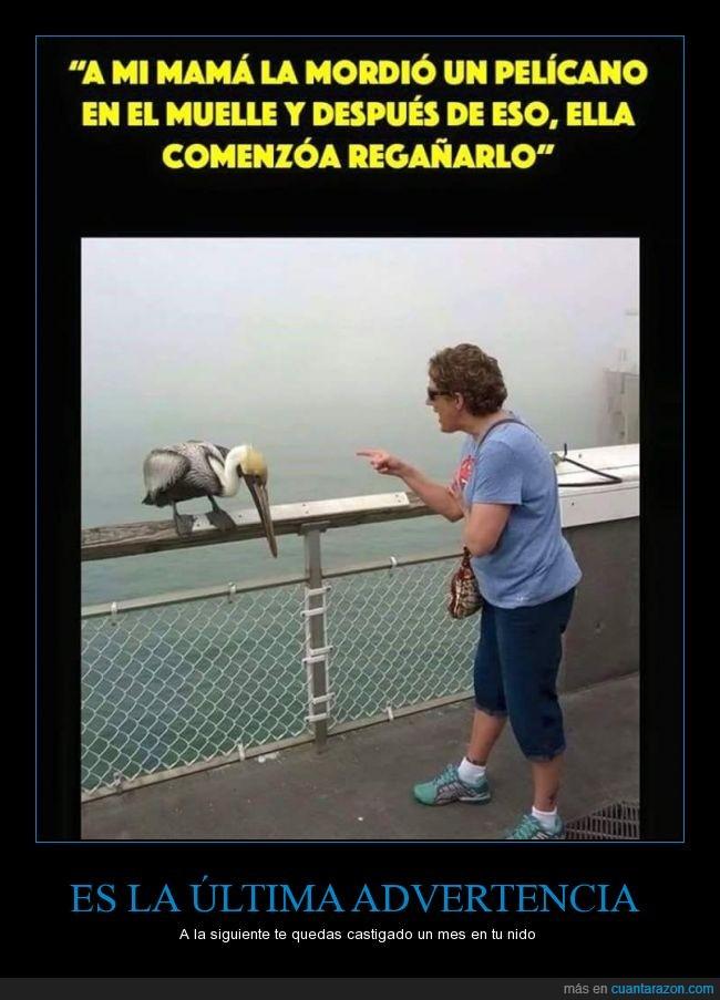 ave,madre,muelle,Pelícano,regañar,regaño,reñir