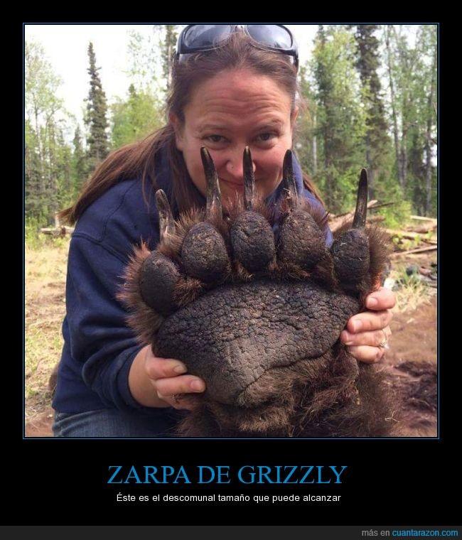 garras,grizzly,no estaba muerto,Oso,pardo,plantígrado,uñas,zarpa