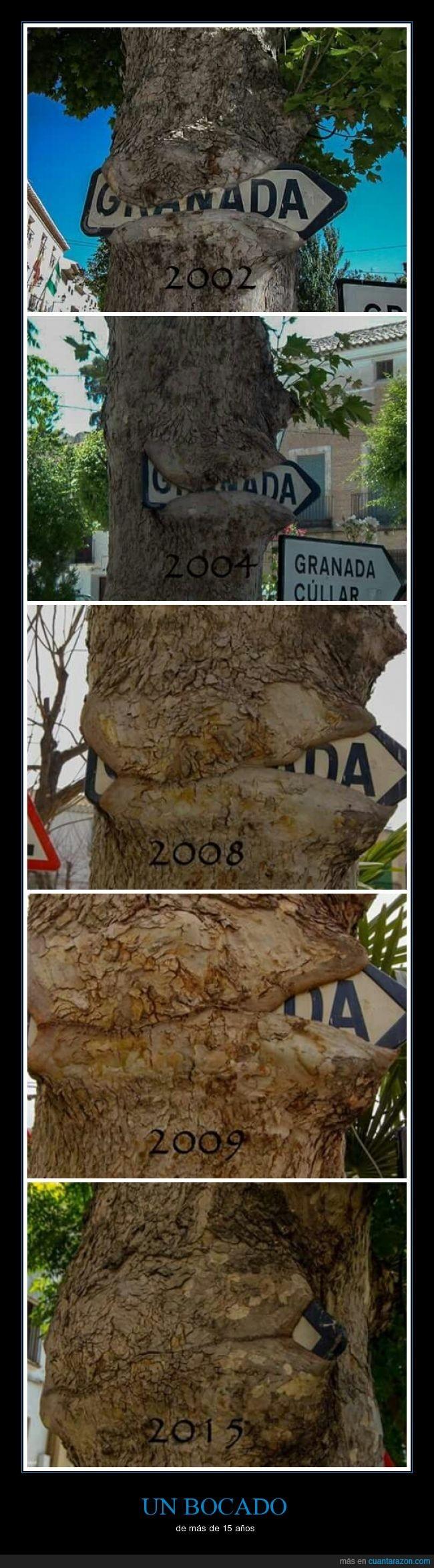 Árbol,Granada,letrero,naturaleza,señal