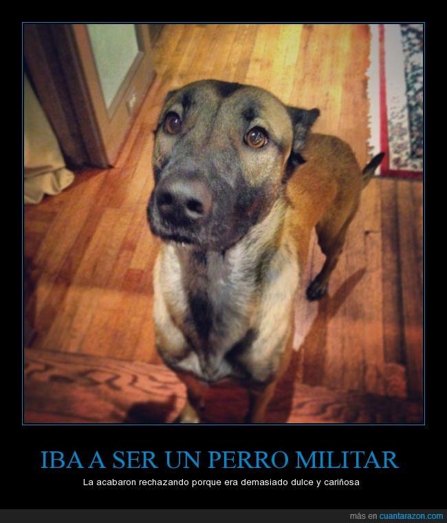 amabilidad,amable,cariñosa,clara,dulce,militar,perra,perro,rechazar,soldado