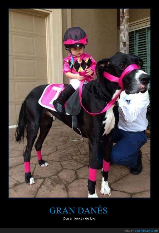 caballo de carreras,can,disfraz,Gran Danés,Halloween,niña,Perro