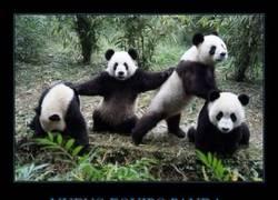 Enlace a NUEVO EQUIPO PANDA