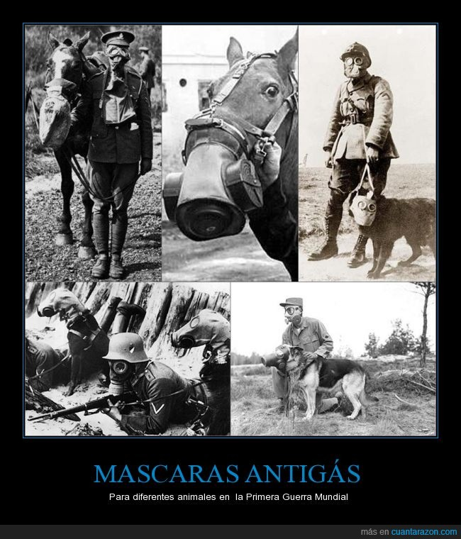 animales,Gas,guerra,mascara antigas,primera guerra mundial