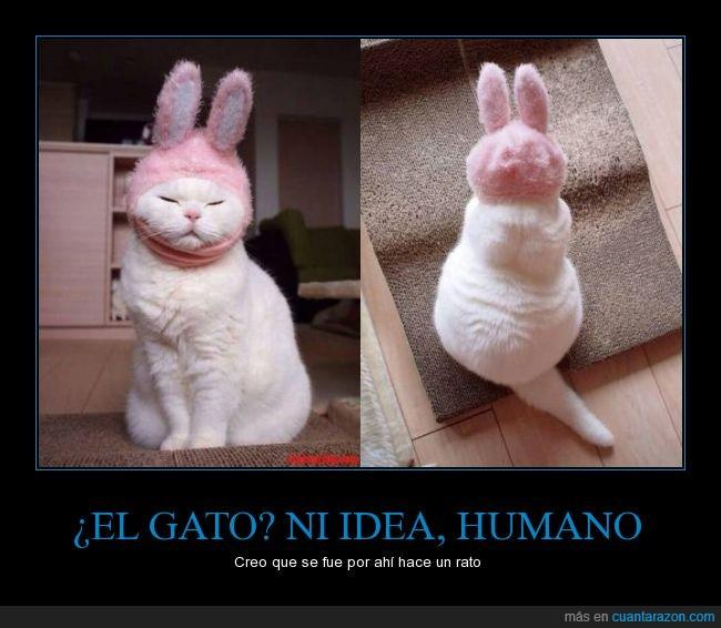 conejito,conejo,disfraz,gato,orejas