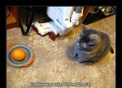 Enlace a Pobre gato, no entiende nada