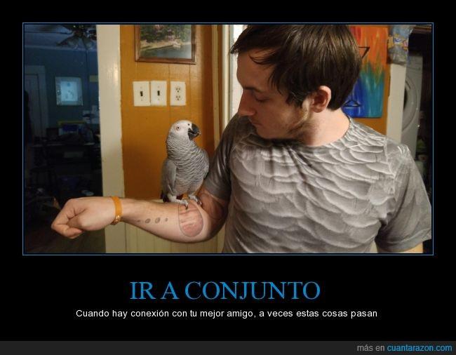 animal,ave,camiseta,gris,humano,loro,mascota,pecho,pluma