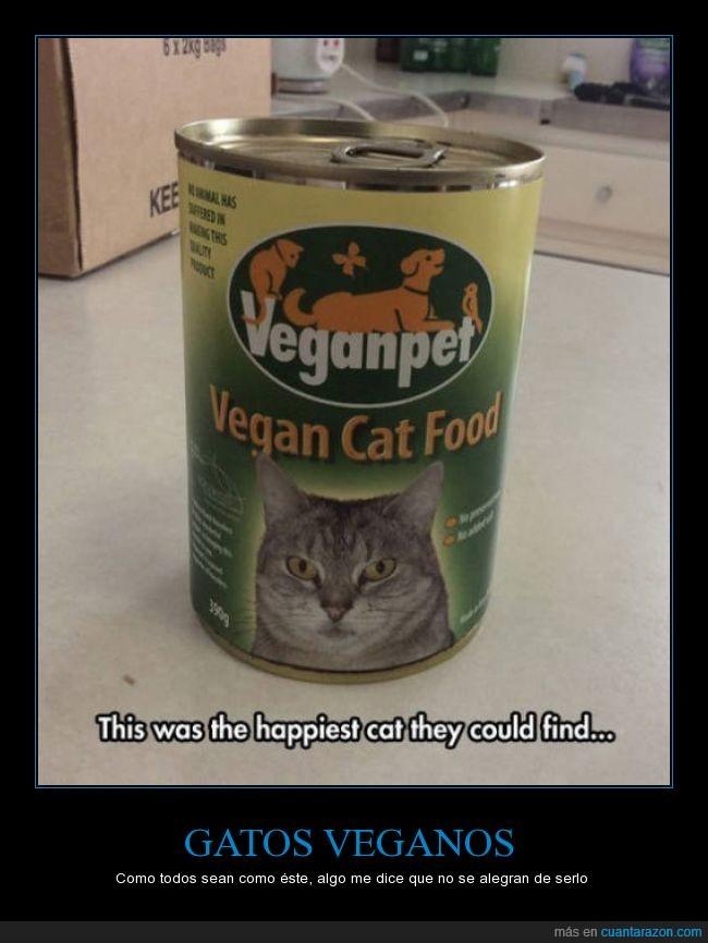animal,cabreado,comida,feliz,gato,vegano,vegetariano