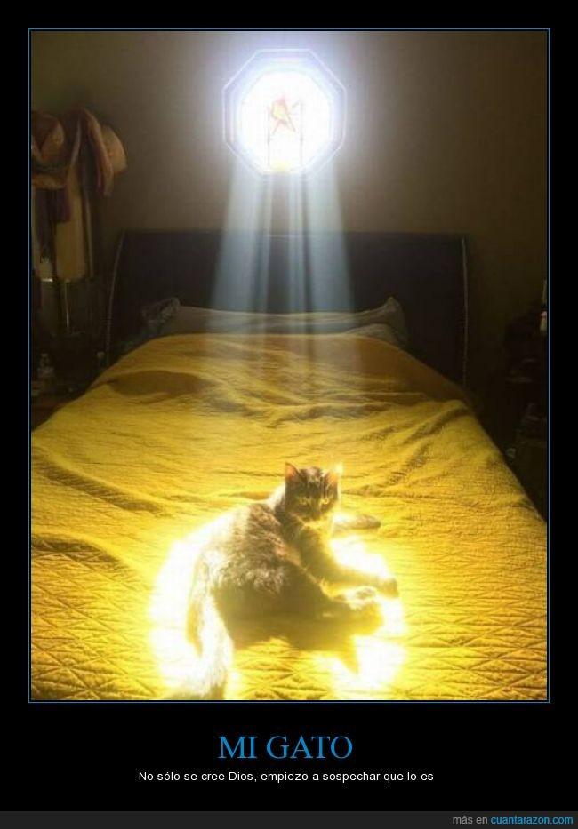 cama,claro,debajo,dios,gato,habitación,haz,luz,ventana,ventanal