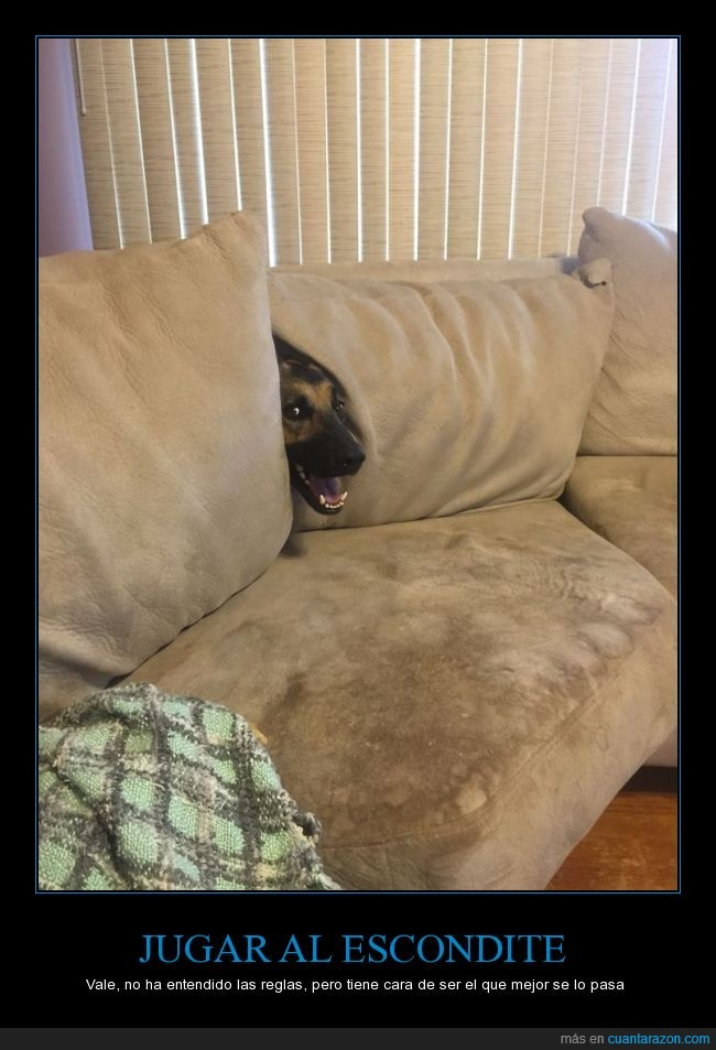 cara,esconder,escondite,jugar,perro,regla,sofá