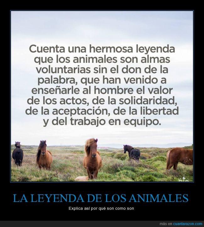actos,animal,caballo,enseñar,hombre,humanidad,leyenda,palabra,voz