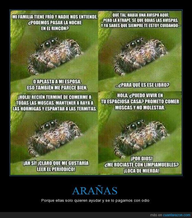arañas,avispa,ayudar,casa,comer,humano,matar,mosca,periódico,rociador