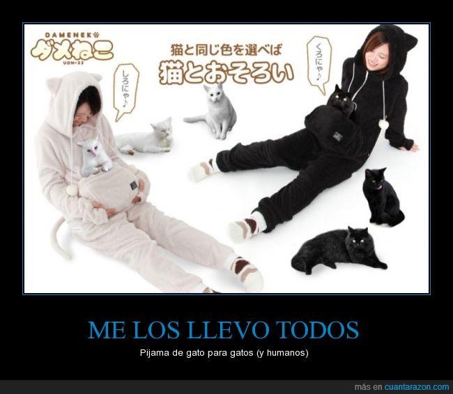 bolsillo,gato,guardar,japon,pijama