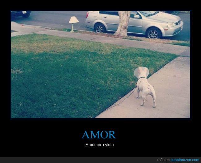 can,humor,lámpara,paseo,Perro