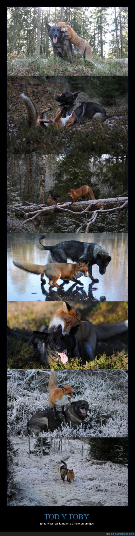 amigo,amistar,cazador,Copper,Disney,pelicula,perro,Sabueso,Toby,Tod,zorro