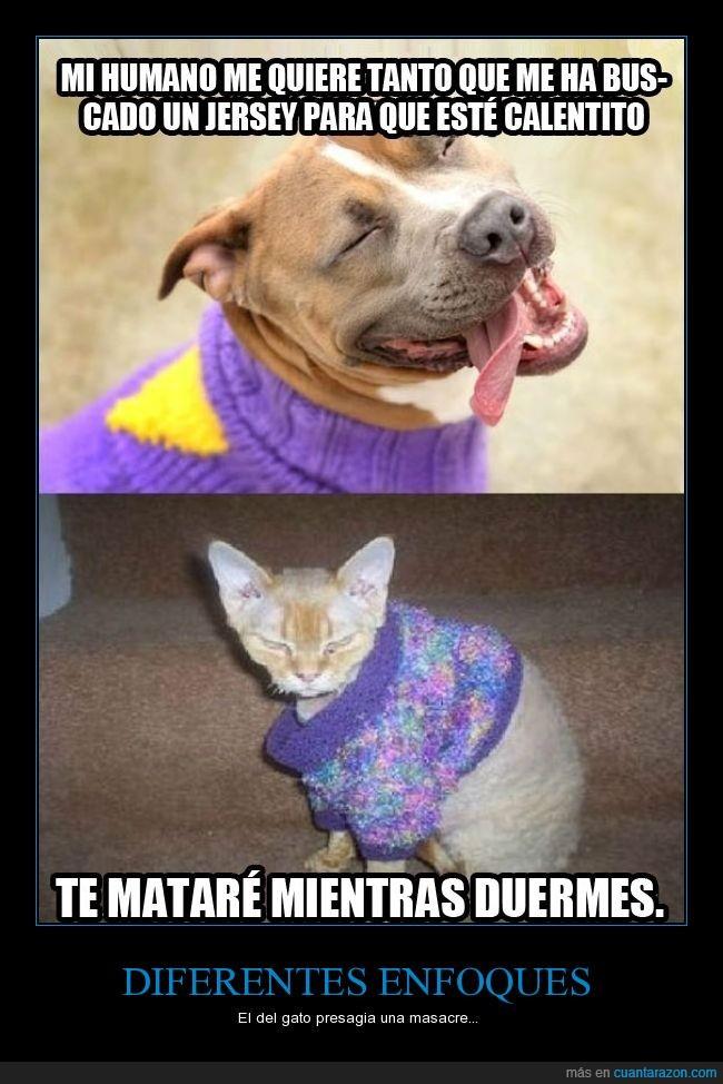 abrigar,abrigo,calentito,diferencia,frio,gato,jersey,matar,perro,ropa,tapar