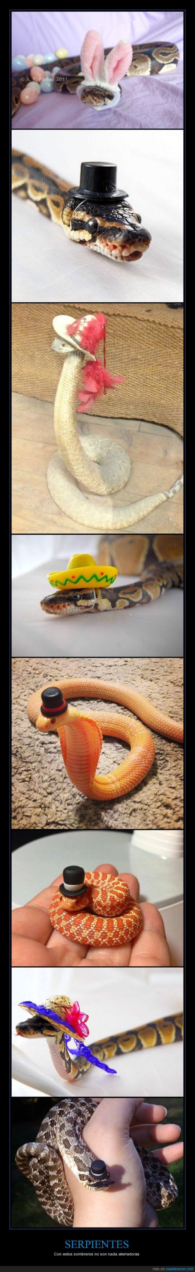 bigotes,copa alta,like a sir,monas,orejas de conejo,pascua,serpientes,sombreros