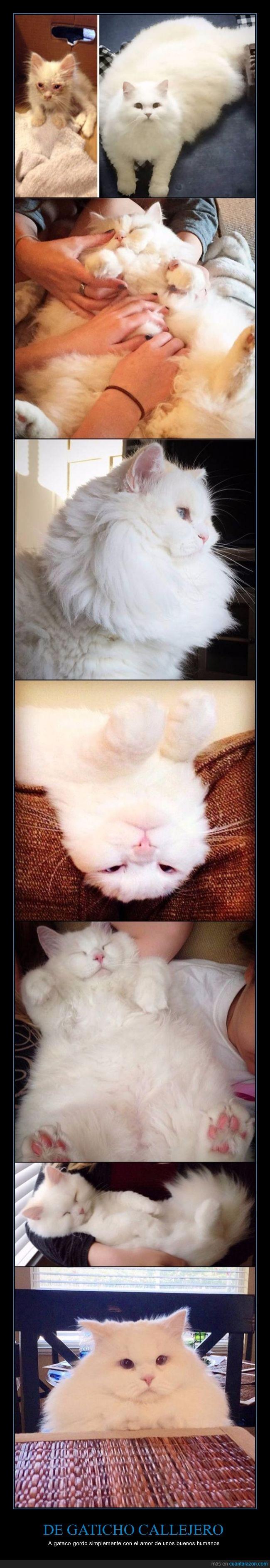 blanco,gato,gordo,pelo,peludo,rescatar,rescate,salvar