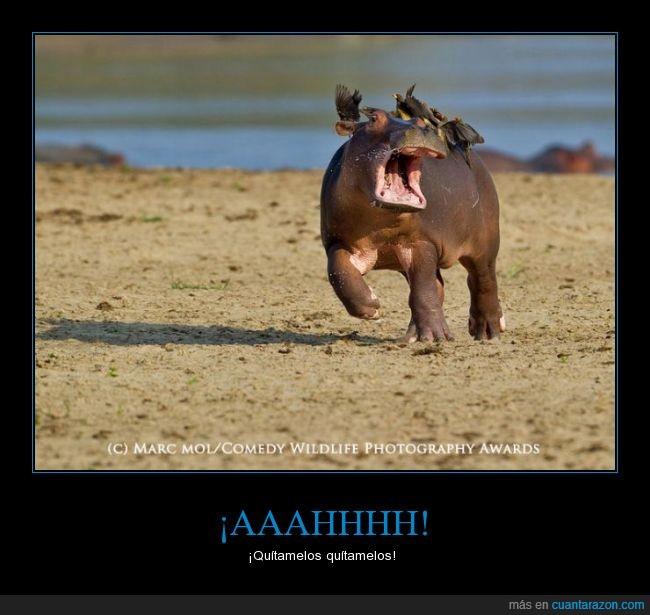 correr,Hipopotamo,pajaro,sacar