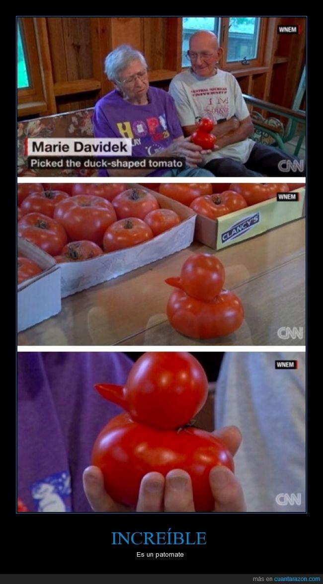 fruta,pato,tomate,verdura